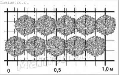 Проекция и правила посадки неформированной двухрядной изгороди