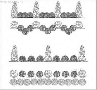 Пример использования сортов туи западной с шаровидной и пирамидальной кроной для имитации регулярного стиля