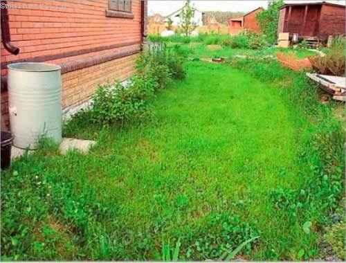 Чтобы снизить проникновение воды в грунт, в зоне водораздела можно заложить газон
