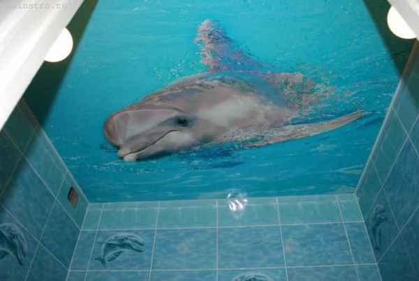 Натяжные потолки в ванной с фотопечатью дельфина